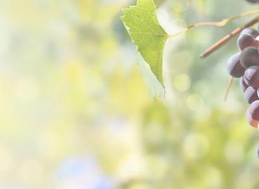 Bevan Cellars - 2020 Fall Release Tasting